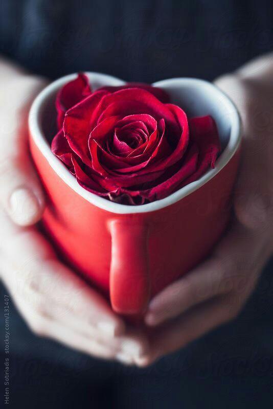 Red Rose pics. yellow rose pics proposing pics cute love pics cute pics love images
