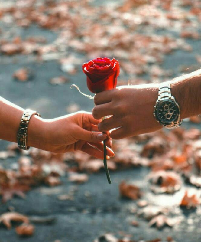 red rose pics yellow rose pics valentine pics cute love pics rose day pics cute pics proposing pics